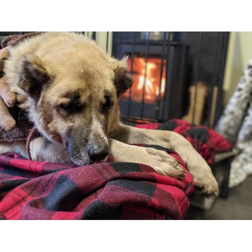 A Warm Fire for a Rescue Dog